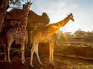 Visit Kenya - Your Travel Guide on Kenya and Safari Bookings